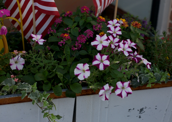 flowers and american flags
